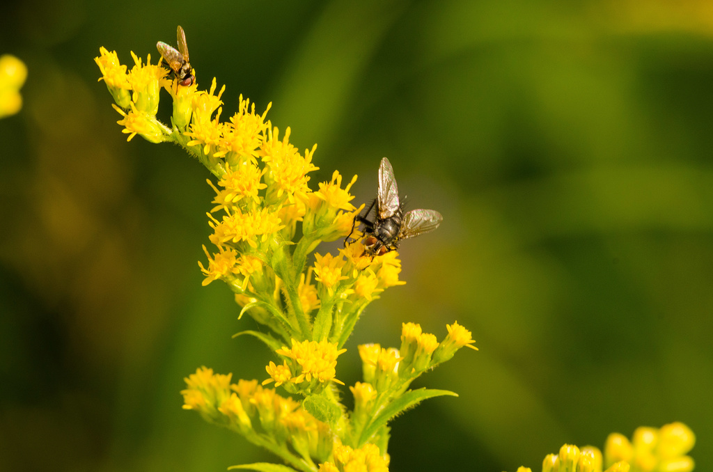 Insecte Dsc_0310