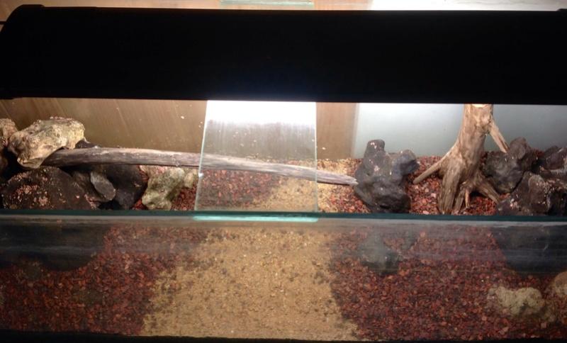 120L spé Tetraodon nain Image24