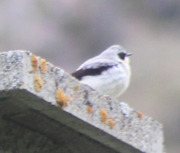 Identification de 2 oiseaux vus en montagne 102110
