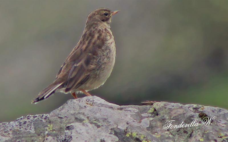 Identification de 2 oiseaux vus en montagne Photo-10