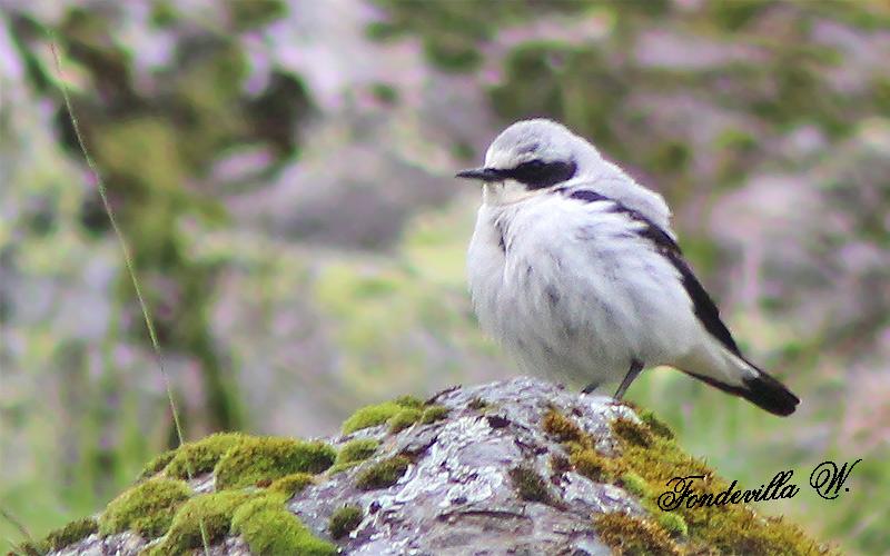 Identification de 2 oiseaux vus en montagne Photo-11