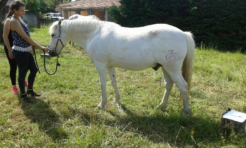 OSCO - Camargue PP né en 2002 - Adopté en mars 2012 par Anaïs  13479710