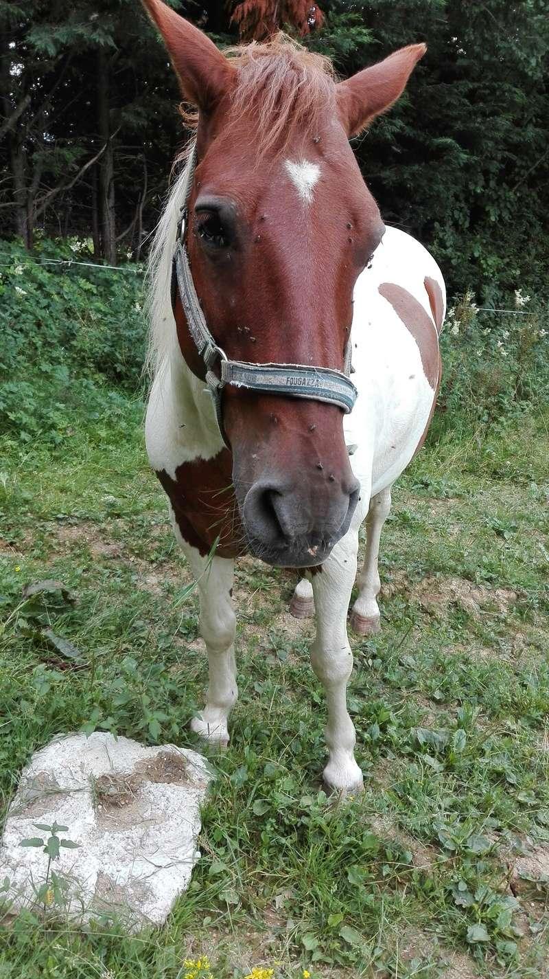 CALINOU  - ONC poney - né en 1999 - adopté en novembre 2012 par Stéphanie - Page 6 Face11