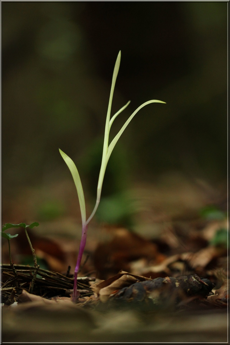 Avis de recherche : orchidées albinos - Page 3 1_alb210