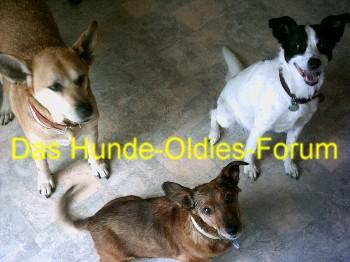 Hunde-Oldies-Welt