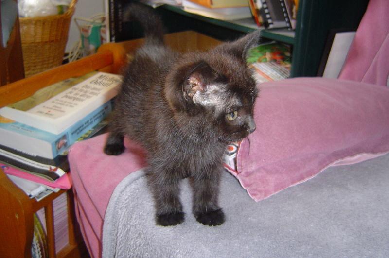 Petite chatte : surprises de l'univers Dsc09510