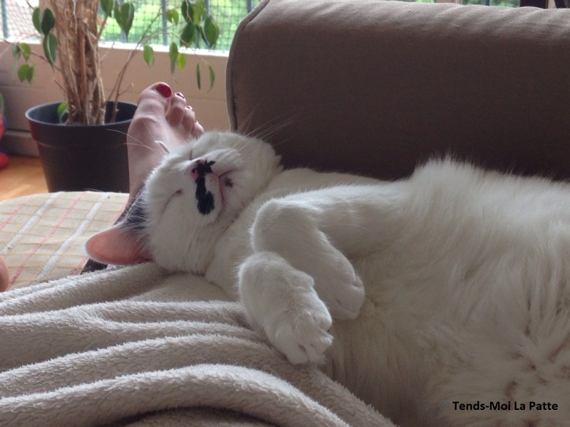 CHAT A ADOPTER : HALLY - chat mâle de 5 ans Mg_26010
