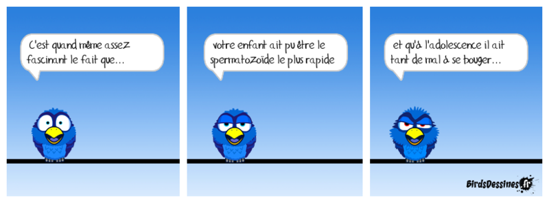 Quelques Birds ? Mahoi_11