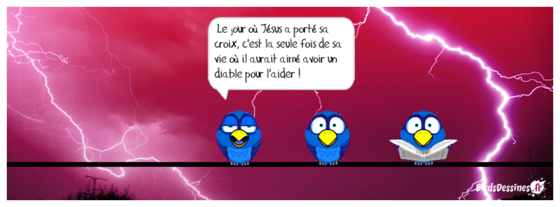 Quelques Birds ? Mister12