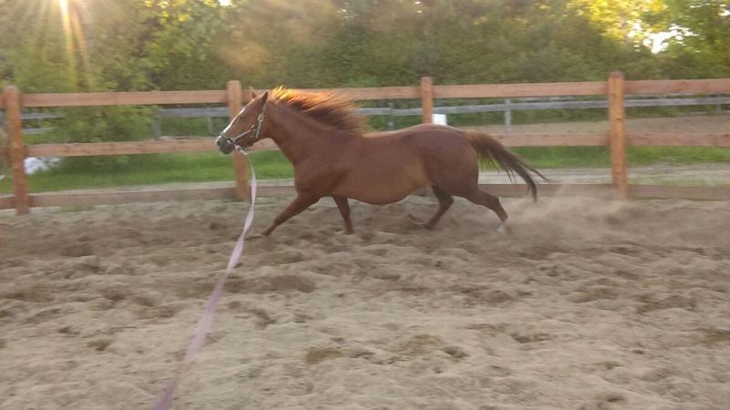 Mes chevaux!  Mia10