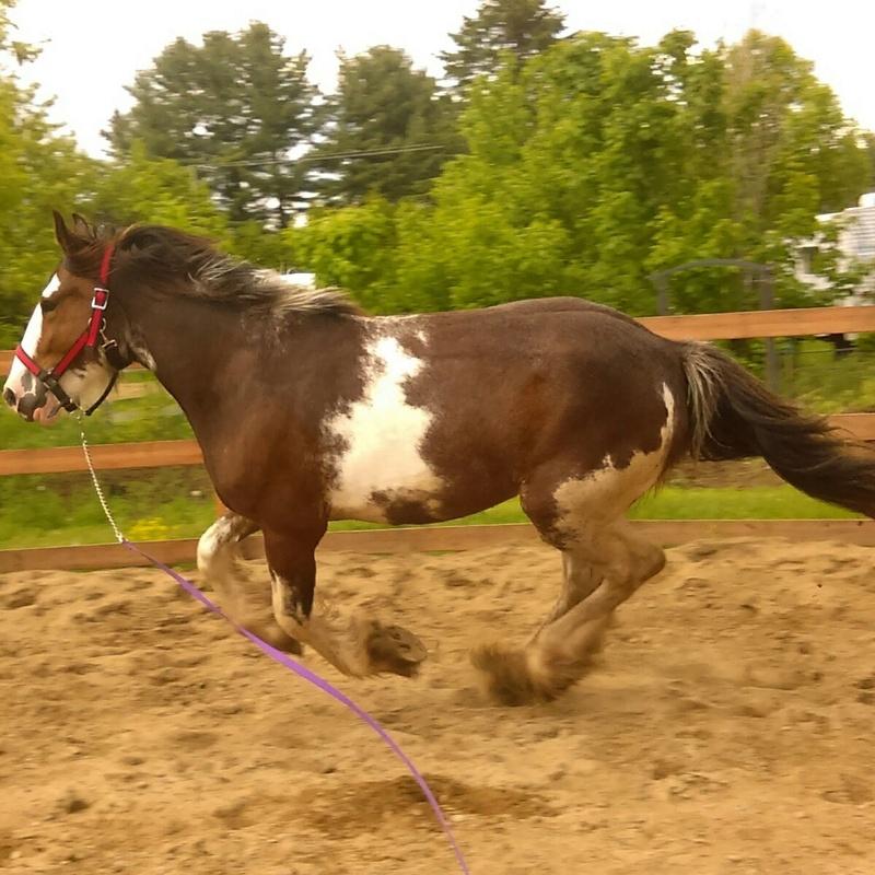 Mes chevaux!  Moon10
