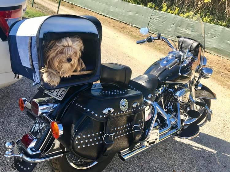 un bagage pour chien 52263512