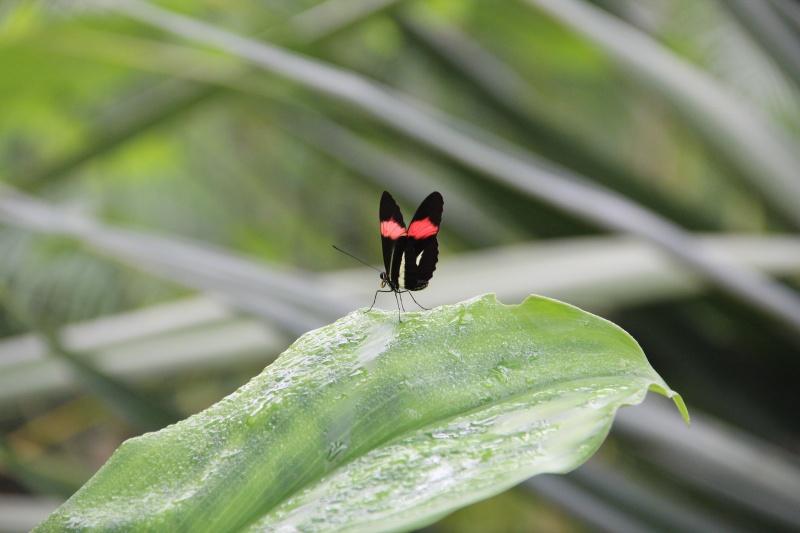 Jardin aux papillons Helico11