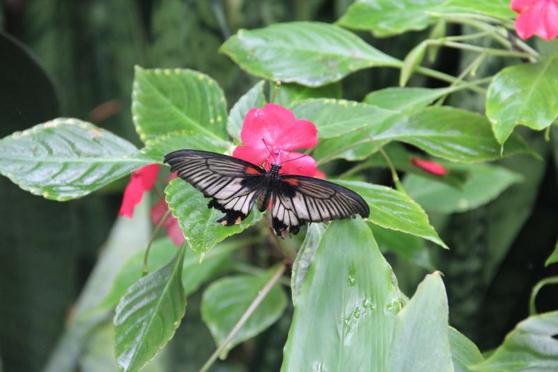 Jardin aux papillons Papili10