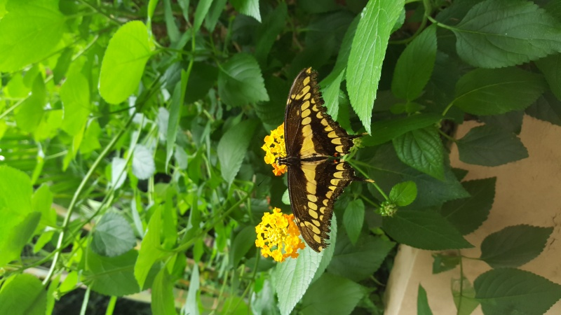 Jardin aux papillons Papili11
