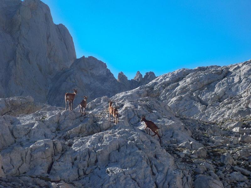 Montañismo: 5-8 de agosto 2016 - Macizo central de Picos de Europa 026_re10