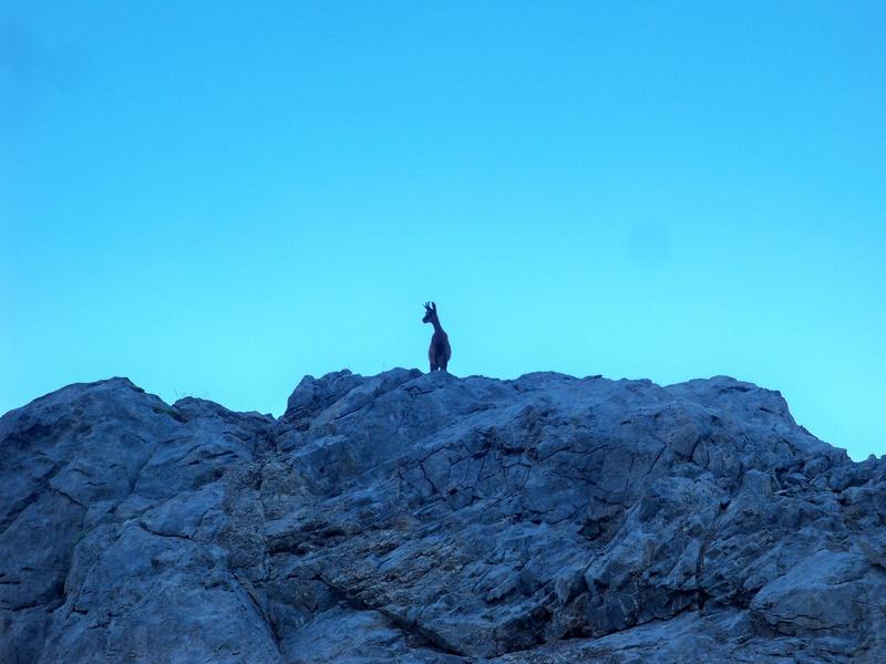 Montañismo: 5-8 de agosto 2016 - Macizo central de Picos de Europa 047_re11