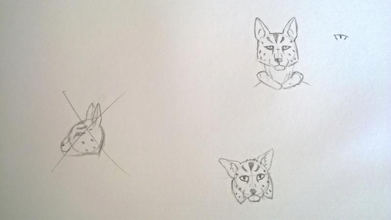 Ma galerie (niveau amateur) - Page 6 Ja_vin11