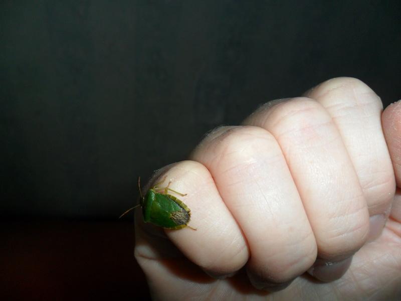 Photos d insectes Sam_6924