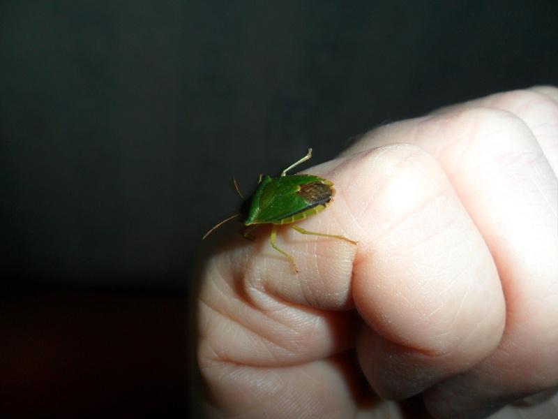 Photos d insectes Sam_6925