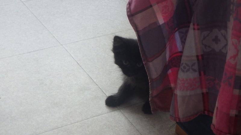 martin - MARTIN,chaton mâle noir,né le 08/06/16 P8090412