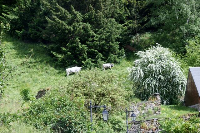 Ballade dans les Pyrénées Dsc02622