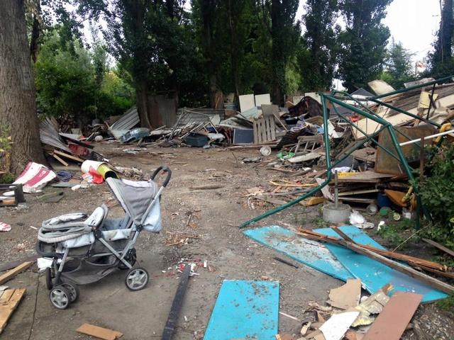 Camp de Roms de Montaudran démantelé : 50 chats sortis de l'enfer 13882310