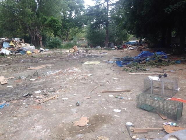 Camp de Roms de Montaudran démantelé : 50 chats sortis de l'enfer 13901910