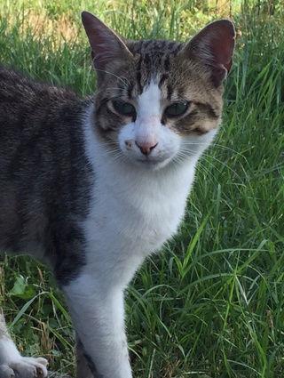 Camp de Roms de Montaudran démantelé : 50 chats sortis de l'enfer 2016-021