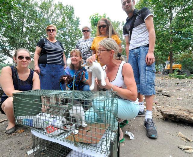 Camp de Roms de Montaudran démantelé : 50 chats sortis de l'enfer 2016-026