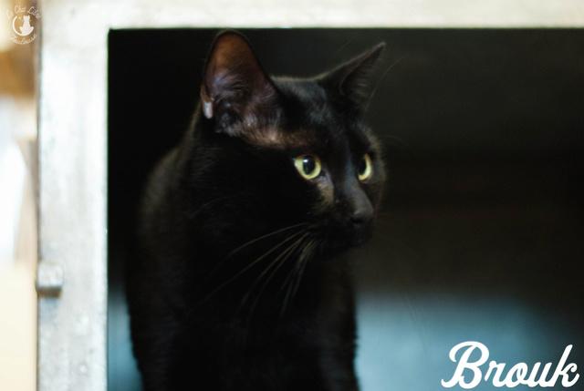 Les chats noirs du local : retrouvez les !  Brouk-12