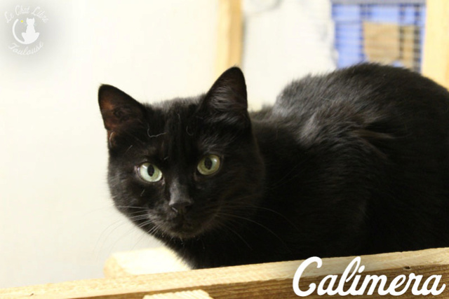 Les chats noirs du local : retrouvez les !  Calime10