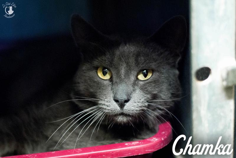 chamka - CHAMKA FIV+  Chamka14