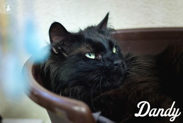 Les chats noirs du local : retrouvez les !  Dandy10