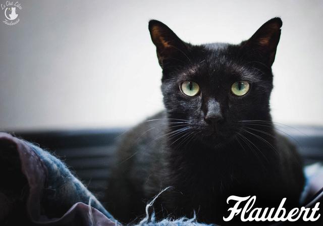 Les chats noirs du local : retrouvez les !  Flaube10