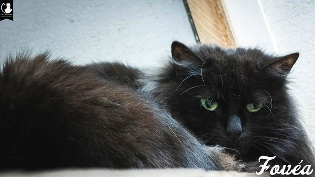 Les chats noirs du local : retrouvez les !  Fovea10