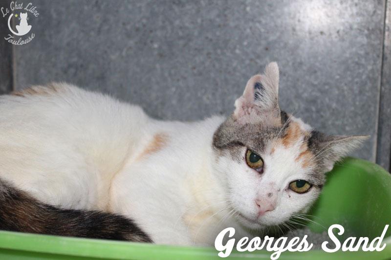 GEORGES SAND FIV+ diabétique alias MINETTE  George11