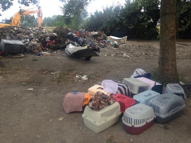 Camp de Roms de Montaudran démantelé : 50 chats sortis de l'enfer Img_4310