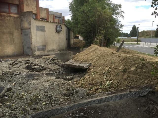 Camp de Roms de Montaudran démantelé : 50 chats sortis de l'enfer Img_9611