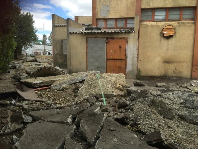 Camp de Roms de Montaudran démantelé : 50 chats sortis de l'enfer Img_9612