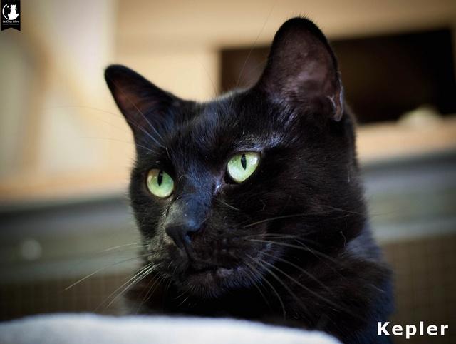 Les chats noirs du local : retrouvez les !  Kepler10