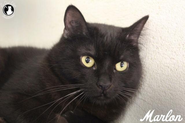 Les chats noirs du local : retrouvez les !  Marlon11