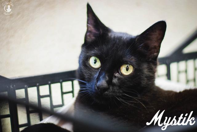 Les chats noirs du local : retrouvez les !  Mystik10