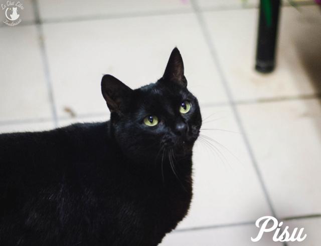 Les chats noirs du local : retrouvez les !  Pisu10