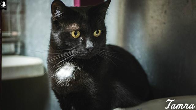 Les chats noirs du local : retrouvez les !  Tamra-10