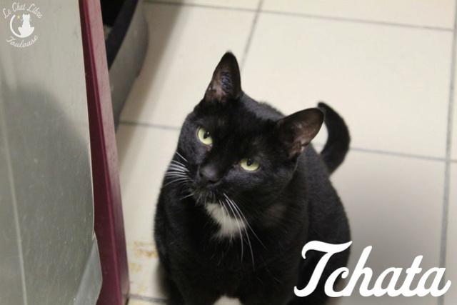 Les chats noirs du local : retrouvez les !  Tchata11