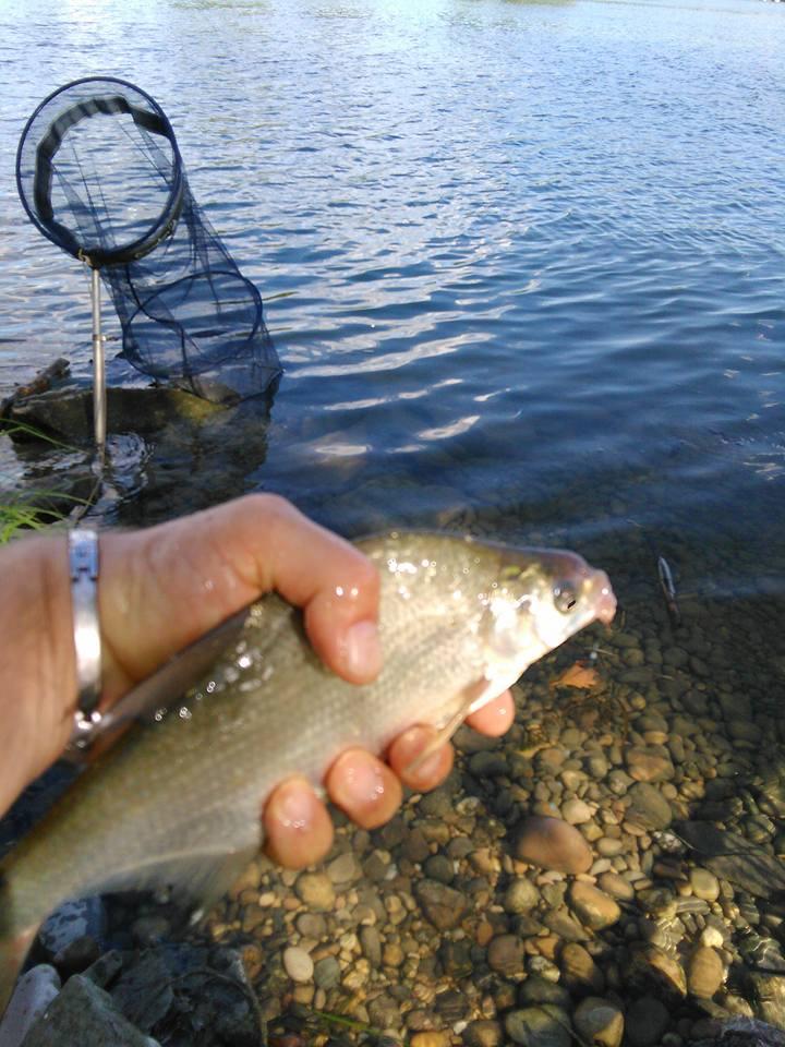 La pêche en Aout 2016  - Page 2 Breme_11