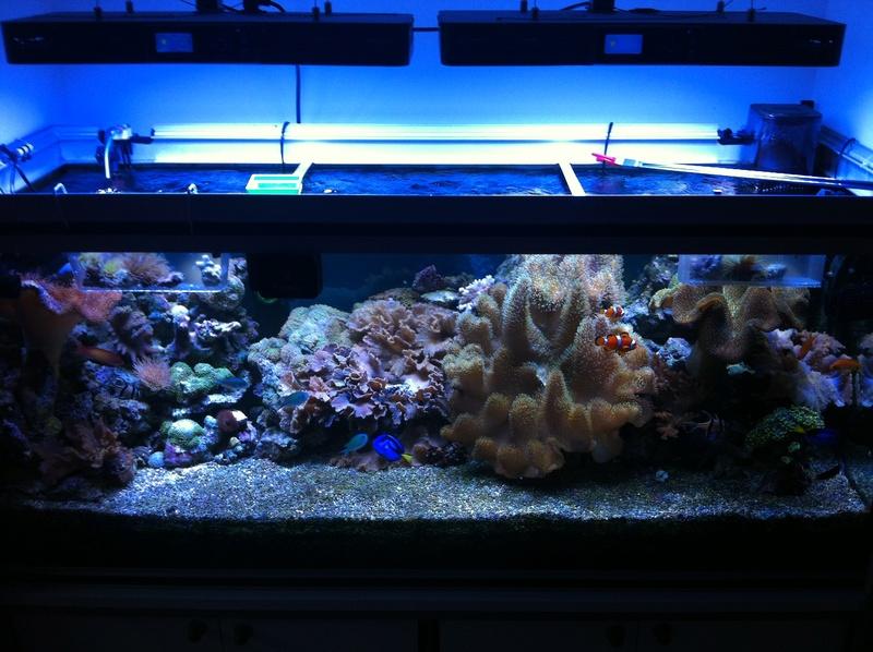 Projet Aqua 450 litres avec ARDUINO - Page 9 910