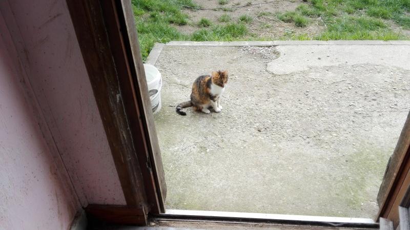 DUCHESSE - chatte femelle, née 2011/2012, borgne - (PASCANI) - adoptée par Chantal Pascal (dpt 63) - Page 5 122_bo10