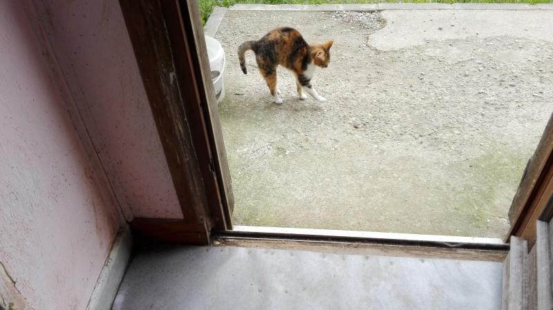 DUCHESSE - chatte femelle, née 2011/2012, borgne - (PASCANI) - adoptée par Chantal Pascal (dpt 63) - Page 5 123_je10
